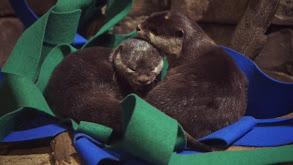 Otter Tale thumbnail