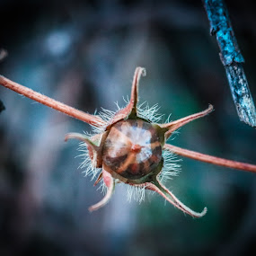 Weird Plant by TJ Morrison - Novices Only Abstract ( abstract, plant, macro, nature, weird )