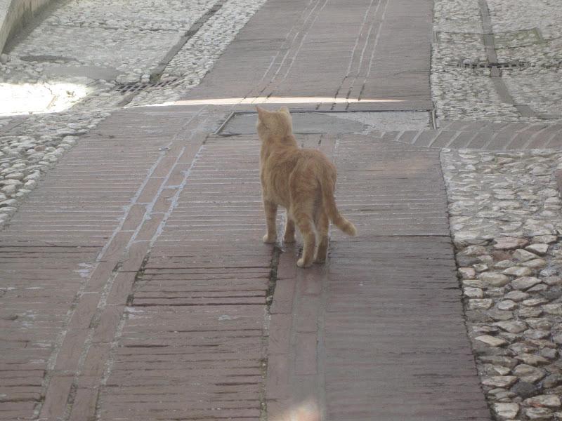 Gatto solitario di emanuela_dolci