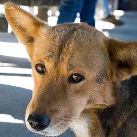 Eyes of Hope by Gaurav Kumar - Animals - Dogs Portraits ( portait, emotional, animalportrait, animalphotography, dog portrait, eyes, hope, emotion, animal )