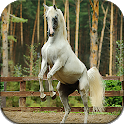 Horses Live Wallpaper (wallpapers & backgrounds) icon