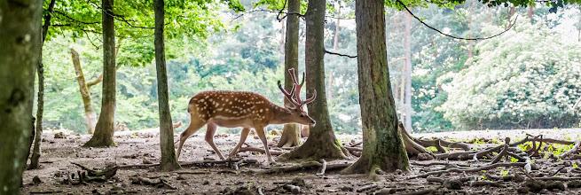 Photo: Puur Natuur buiten Nederland