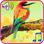 Birds sound ringtones