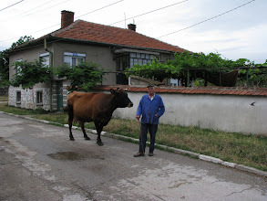 Photo: Gorski Izvor in the evening; animals coming home.