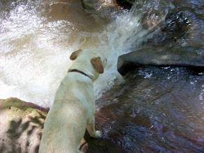 Photo: Sandydog at a little waterfall in Manitou Springs, CO