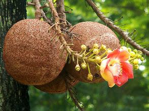 Photo: Niezidentyfikowany owoc / Unidentified fruit