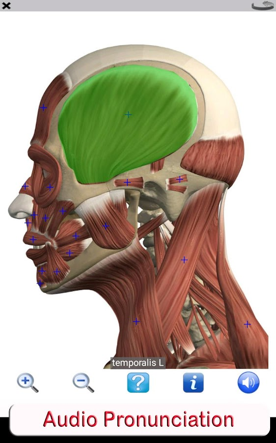 Visual Anatomy Free- screenshot