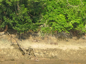 Photo: Monkeys on island