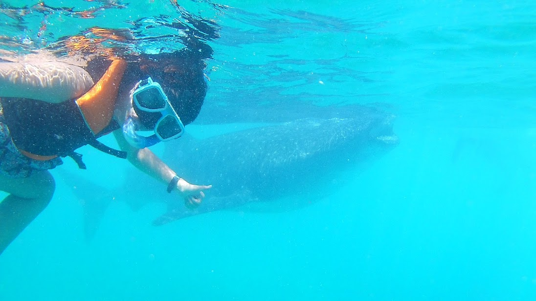 oslob-whale-shark-whatching-cebu