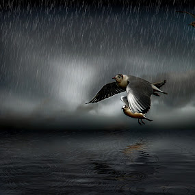 seagulls in stormy weather by Egon Zitter - Digital Art Animals ( bird, seagull, sea, ocean, storm, digital, rain )