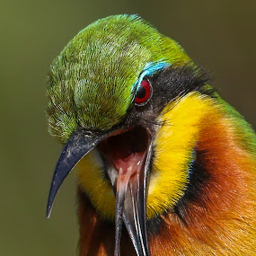 Yuck!!! by JD Lotz - Animals Birds