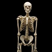 App Human Anatomy APK for Windows Phone