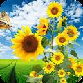 Sunflower Wallpaper Best 4K APK
