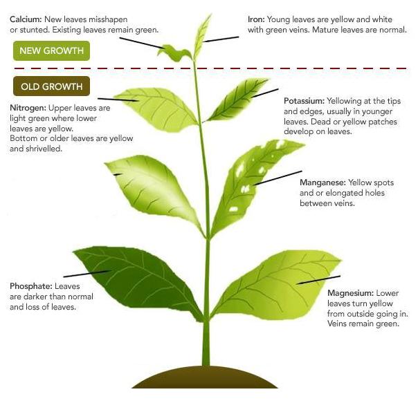 Simple plant deficiency guide