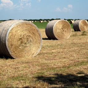 Summer Cut by Stephanie Ostrander Bishop - Landscapes Prairies, Meadows & Fields ( pwcsummer )