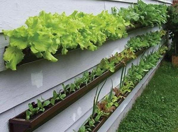 Create a window box veggie patch using guttering.