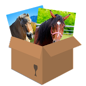 Horses: Puzzle Box
