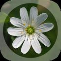 Mobile Flora - Wild Flowers icon