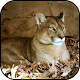 Download Cougar Wallpapers For PC Windows and Mac