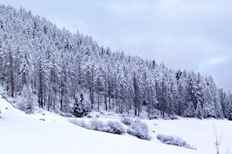 Photo: Stierva - Winterwald