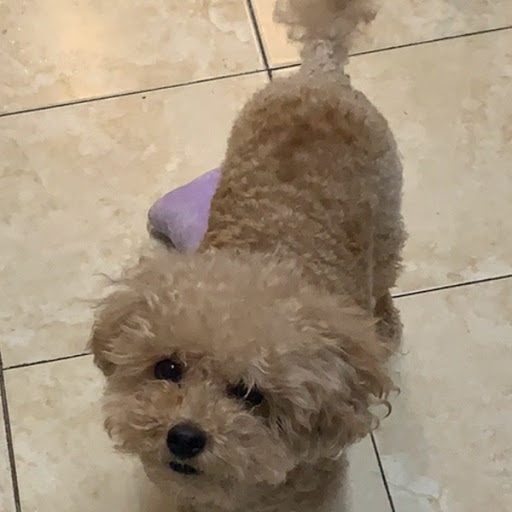 Teddy, MISSING Dec 1, 2019