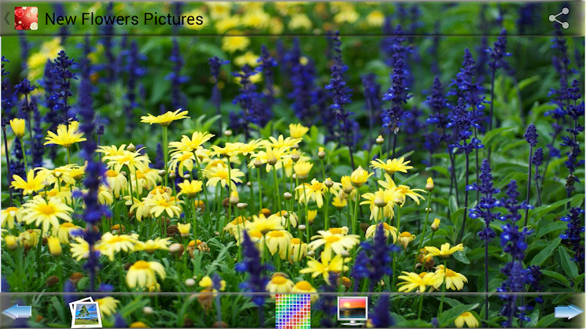 android New Flowers Pictures Screenshot 0