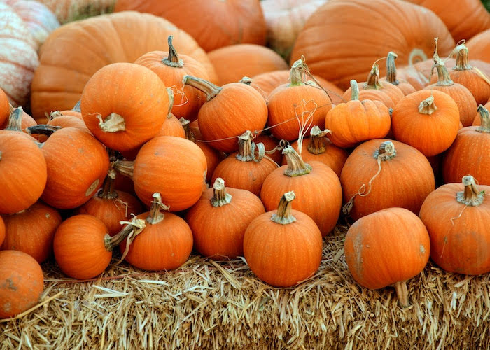 Eat and recycle your Halloween pumpkins, says council