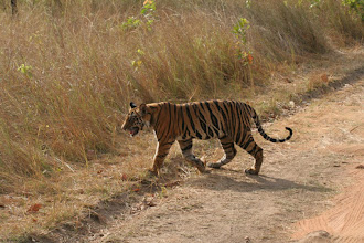 Photo: Another beautiful photo from Philip Davis who works so hard to try and help save the Tiger.