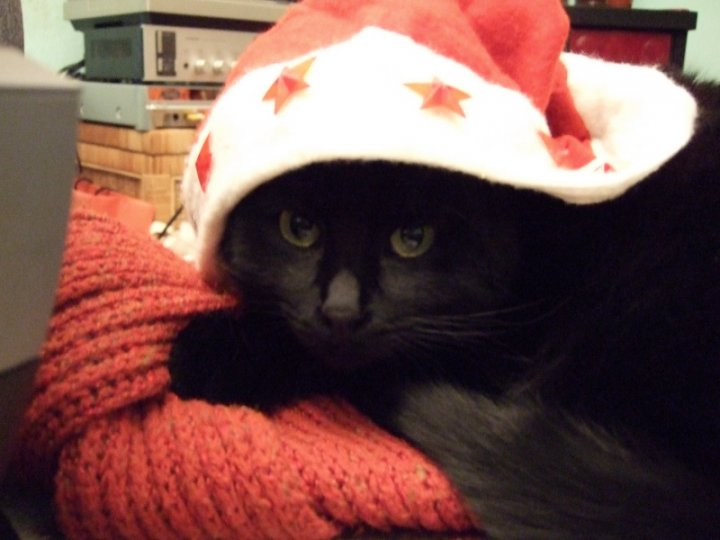 Gatto Natale di akiram.cats
