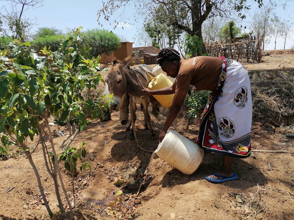 KENDAT supports small-holder farmers earn more from donkeys