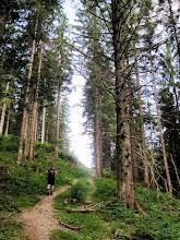 Photo: Zunächst geht es durch Wald aufwärts.
