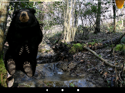 Angry Bear- screenshot thumbnail