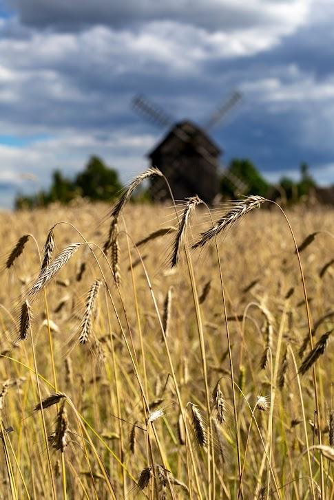 Skansen w Maurzycach, wiatrak