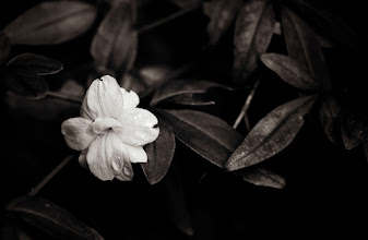 Photo: goodnight, enjoy the rest of your day wherever you might be :)  #flowers  #monochromeartyclub  #monochrome  #breakfastclub