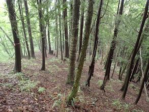 植林の下草のない林に