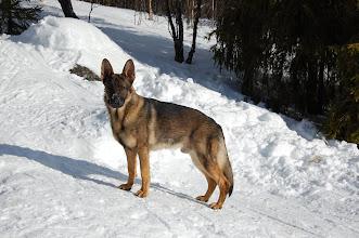 Photo: Hund i bakken!