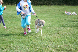 Photo: Lilly and Henry Whippet