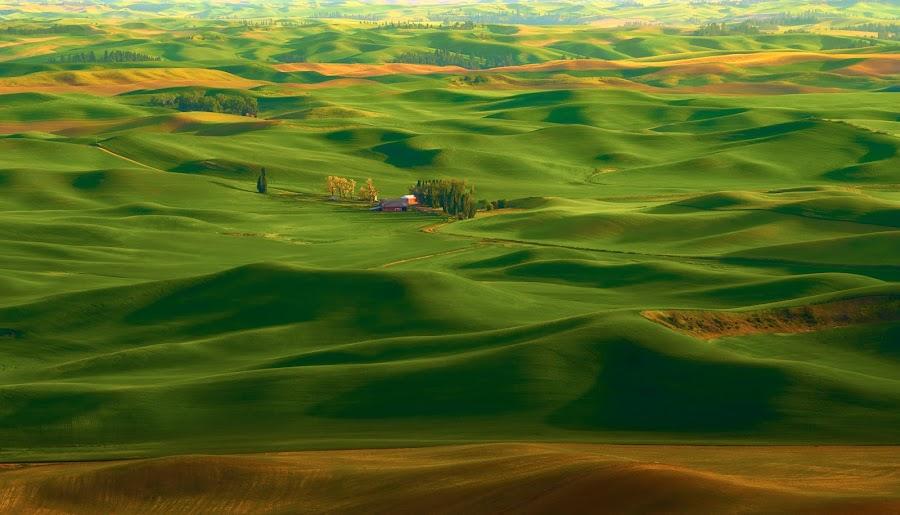 Palouse Home by Dan Hayes - Landscapes Prairies, Meadows & Fields ( farm, hills, palouse, rolling, sunset, green, grain, scenic, house, landscape, fertile,  )