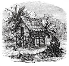 Photo: Alfred Russel Wallace's house at Bessir, Waigiou from his book 'The Malay Archipelago'. Wallace is the figure seather under the tiny house. Copyright George Beccaloni
