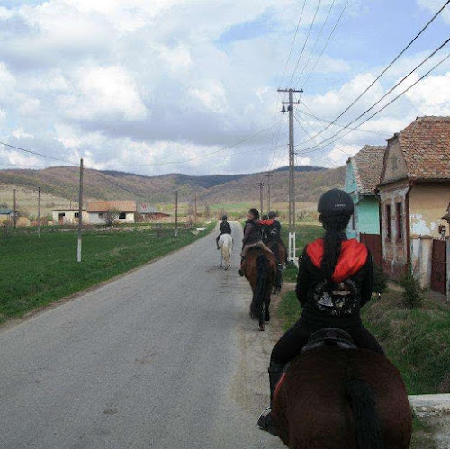 Trail Riding through a Romanian Village on Horseback
