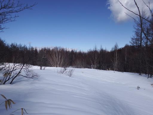 広い雪面に(右手が古池か?)
