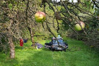 Photo: sad jablkowy na nocleg wedle zyczenia :)