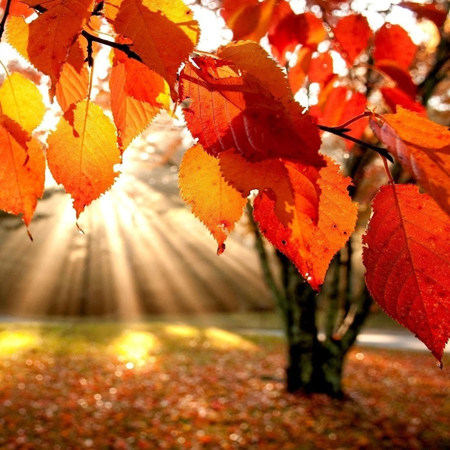 autumn live wallpapers android apps on google play