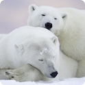 Polar Bear Wallpaper – HD Backgrounds icon