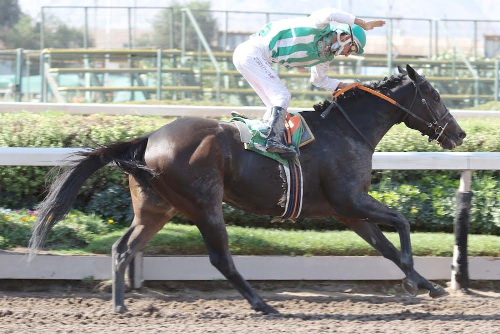 Win Here (Breathless Storm) gana el Clásico Julio Prado Amor (2000m-Arena-HCH).