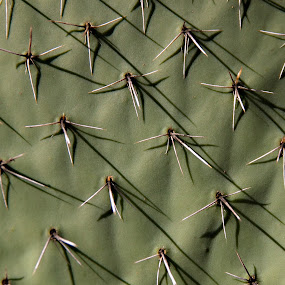 Cactus Close Up by Sherry Hallemeier - Nature Up Close Other plants ( prickle, macro, cacti, prickly, green, bush, landscape, close up, garden, cactus,  )