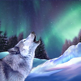 Wolf on a snowy night by Charlie Alolkoy - Illustration Animals ( sky, wolf, stars, snow, aurora borealis, night )