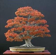 日本の盆栽のデザインのアイデアのおすすめ画像5