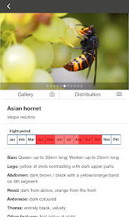 Asian Hornet Watch- screenshot thumbnail
