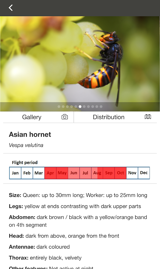 Asian Hornet Watch- screenshot